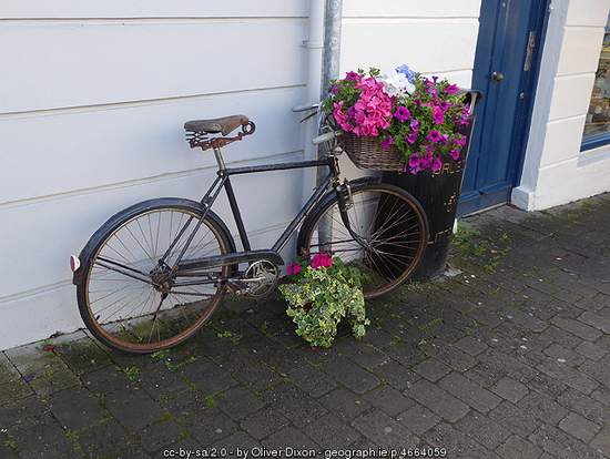 Old Bicycle with flower basket