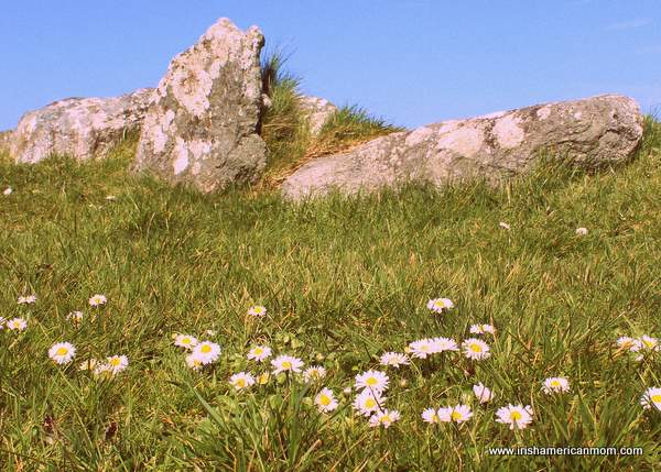 Daisies beneath the rocks in Ireland