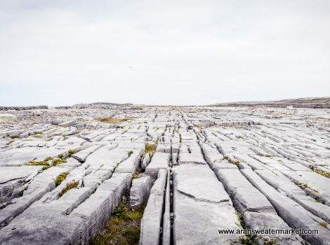 Limestone paving found on Inis Mor Aran Islands, Ireland