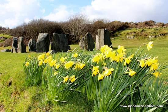 Drombeg Stone Circle in spring