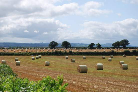 Field of hay bales in Whie Bog County Laois Ireland