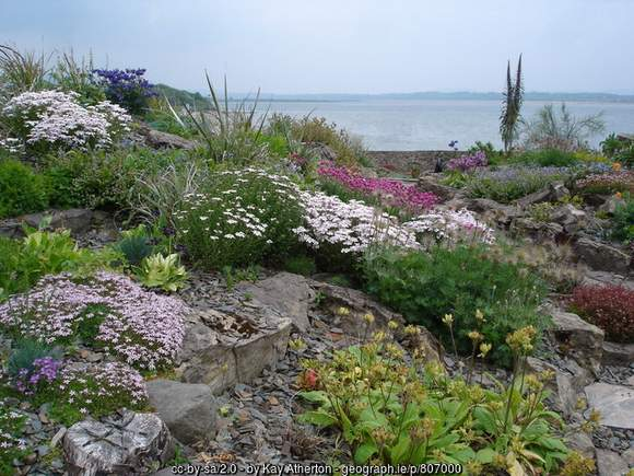 Flowers in the alpine gardens at Lissadell House County Sligo