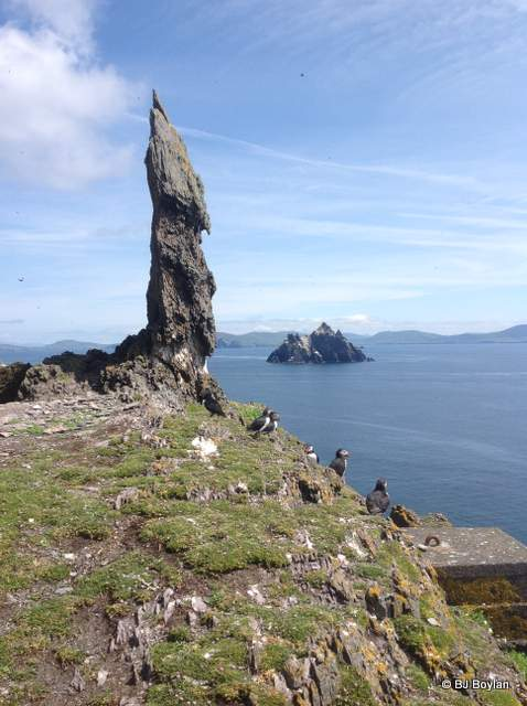 Puffins on Skellig Michael looking towards Little Skellig