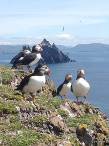 Puffins sitting on the rocks of Skellig Michael