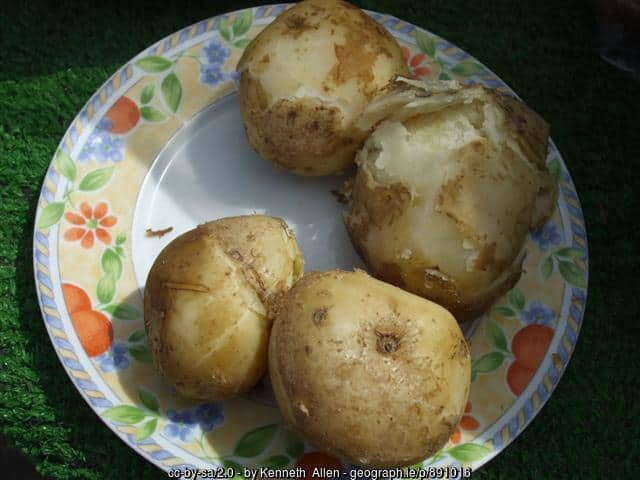 Irish floury potatoes - good Irish spuds