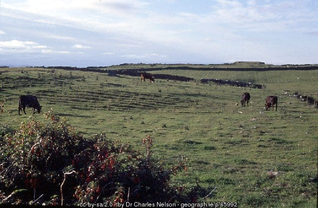 Old potato fields near Renvyle County Galway
