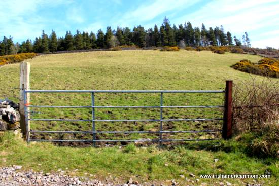 A gate by a field in Sligo Ireland