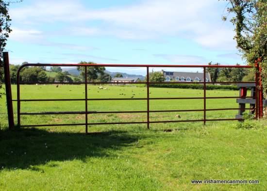Green fertile field in Ireland seen through an iron gate