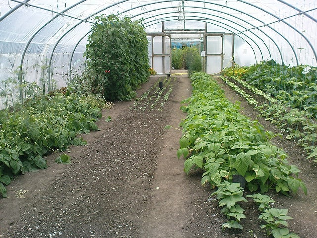 Vegetables and herbs growing in a glass hot house