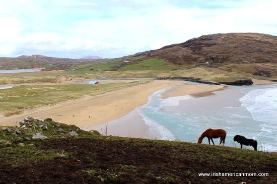Horses on a hill beside a sandy beach and mountain