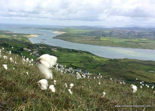 White wild cotton growing on a hill looking out over an ocean inlet