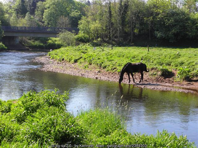 A horse drinking from a river beside a green field