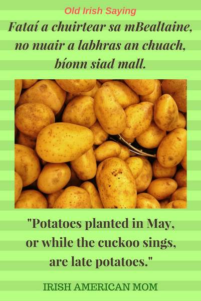 a green striped graphic with text and an image of unpeeled potatoes