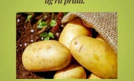 Old Irish potato sayings
