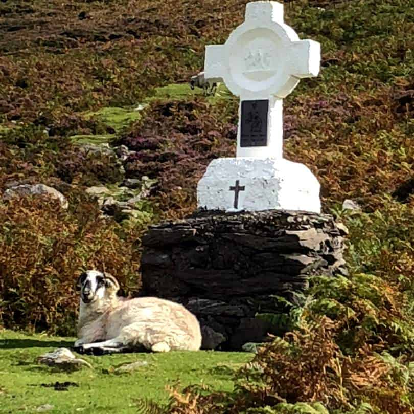 A holy sheep in Ireland