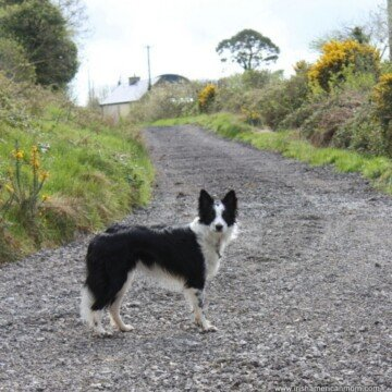Dog on a gravel road