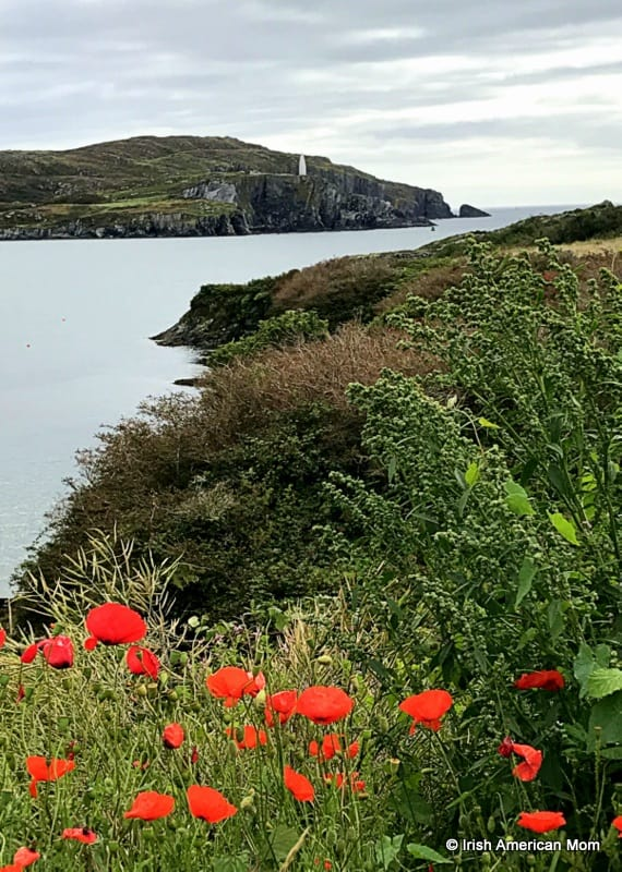 A body of water by a shore with red poppies growing in the foreground
