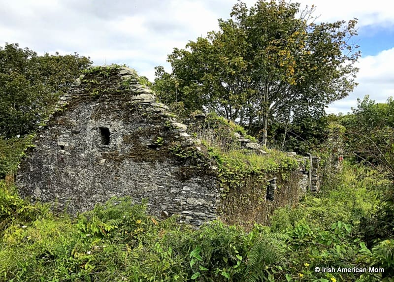 A roofless cottage ruin with a tree growing insideng