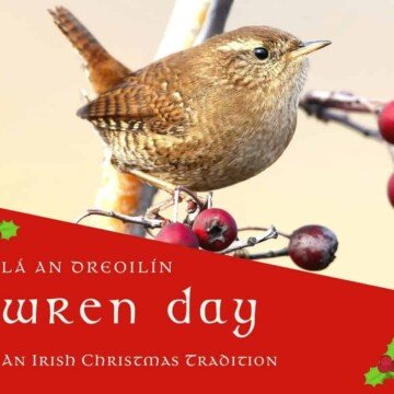 A wren on a branch with red berries symbolizing the Irish tradition of Wren Day