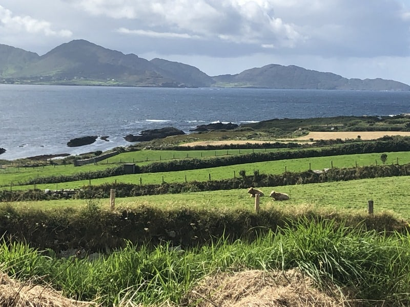 Green fields with cows sweep down to the sea on an Irish offshore island