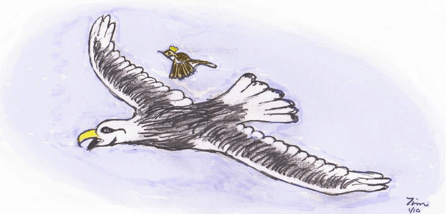 A little wren flies above an eagle to claim the title of King of all Birds