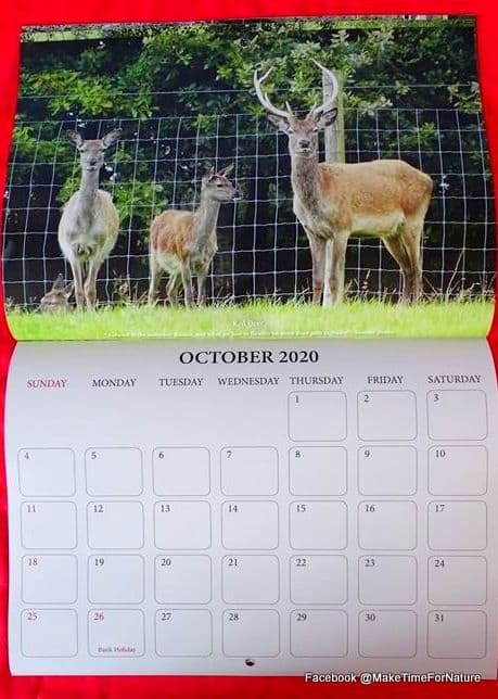 Calendar page for October 2020 featuring three deer by a fence