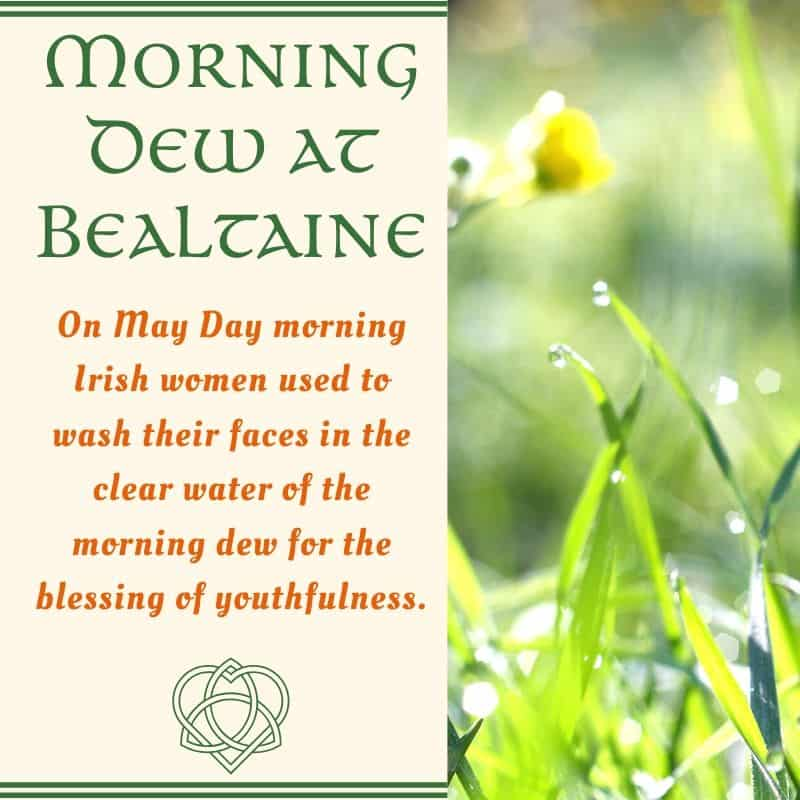A graphic showing grass with dew to illustrate the morning dew at Bealtaine