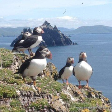 Black and white puffins standing on the edge of a cliff off the coast of Ireland