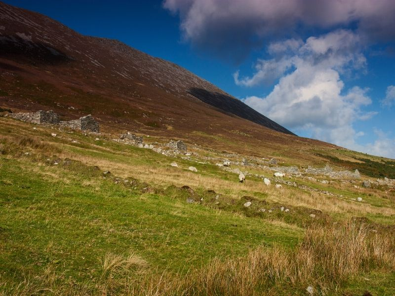 Ruined stone cottages standing in a row on the slopes of a heather clad mountain.