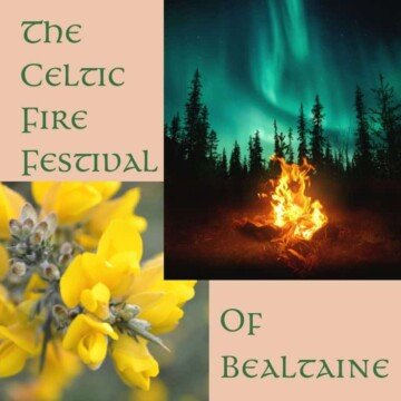 A graphic showing a lighting bonfire and blossoms of a gorse or furze bush which are symbols of the Celtic Fire Festival of Bealtaine