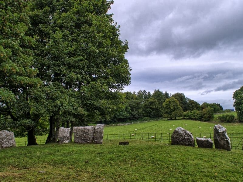 A large tree beside a circle of stones in a green field