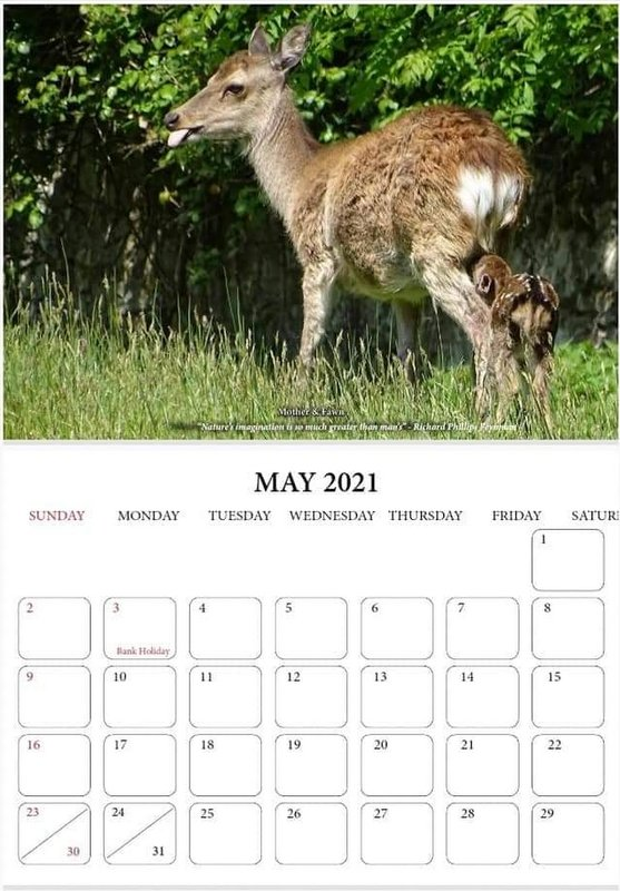 A mother deer with a suckling fawn in green grass on a calendar page