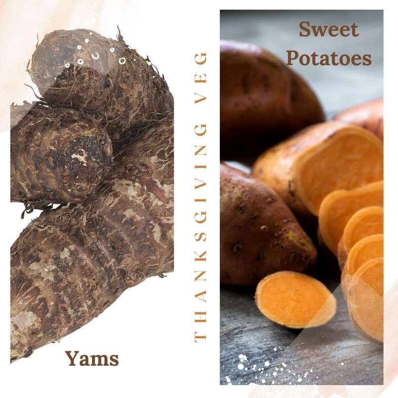 A two image photo collage showing dark thick skinned yams to the left and lighter skinned, orange fleshed sweet potatoes to the right