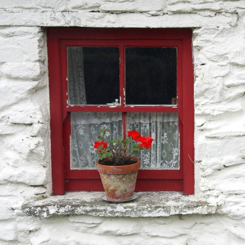 A red cottage window in a white stone wall with a flower in a pot on the sill