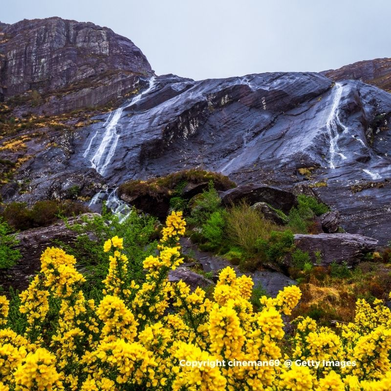 Waterfall on a mountain with yellow flowers in the foreground