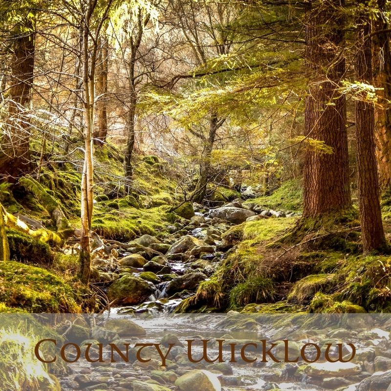 Trees beside a mountain stream with text overlay