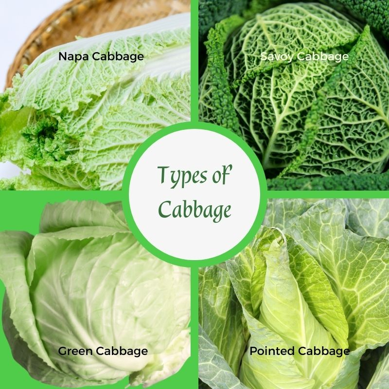 Types of cabbage in a collage with a text circle