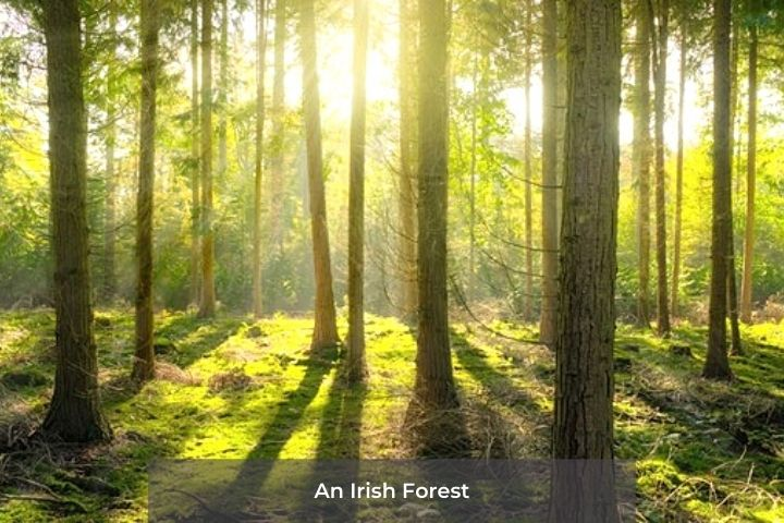 Light through trees in a forest