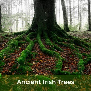 Tree with moss covered roots and a text banner